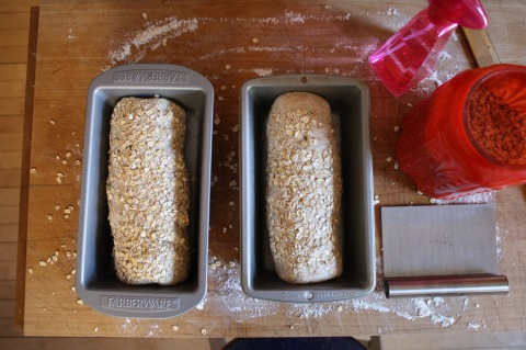 loaves, before rise