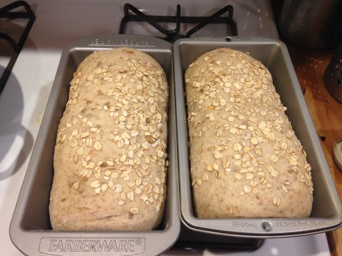 loaves, after rise